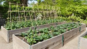 Rock Vegetable Garden Golden Agers Rock The Joys Of Vertical Gardening