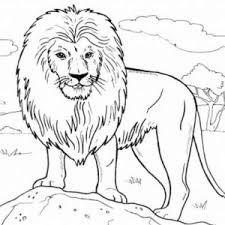 funny picture lion coloring color luna 14874