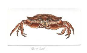 shore crab crustaceans small prints hand coloured etching print