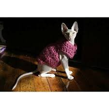 sphynx sweaters cats hairless sphynx cat cats in sweaters sphynx cats in