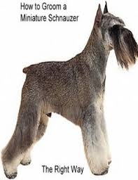 schnauzer hair cut step by step how to groom a miniature schnauzer the right way by doreen