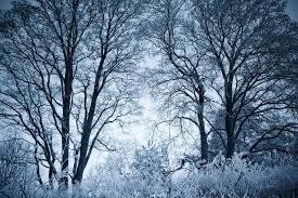 frosty trees by sok on deviantart