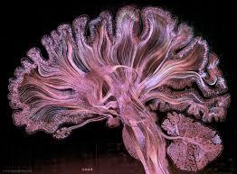 neuralink and the brain u0027s magical future wait but why