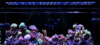current usa orbit marine aquarium led light aquarium led lighting wave pumps accessories current usa