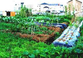vegetable garden design ideas backyard designs and plans interior