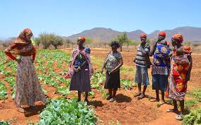 How To Plant Vegetables In A Garden by Picture Story Gain Backs Community Garden Projects In Kenya