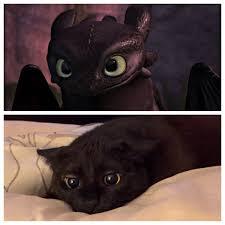 Toothless Meme - black cat totally looks like toothless totally looks like