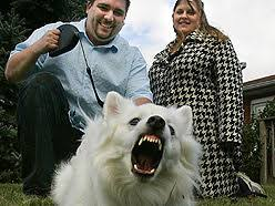 american eskimo dog london this dog u0027s bite worse than its bark the london free press