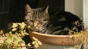 outdoor cat versus indoor cats the happy cat site outdoor cat