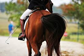horseback riding lessons and training