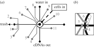 microfluidic single cell analysis of intracellular compounds