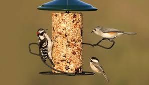 Backyard Wild Birds The Secret To Getting Birds To Flock To Your Backyard Feeder