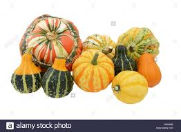 selection of ornamental gourds with striped turks turban squash