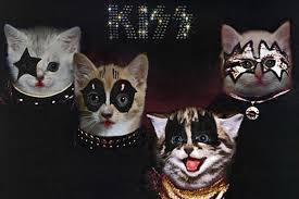 Cat Photo Album Kittens Take Over Classic Rock Album Covers