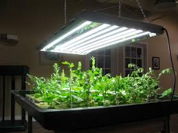 indoor vegetable garden setup garden design ideas