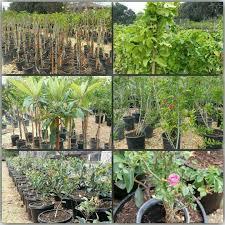 saturday 3 18 17 all trees in 5g are best buy plants nursery