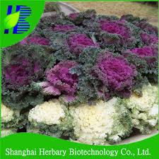 beautiful garden scenery flower ornamental kale seed buy kale