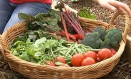 regional tips for first time vegetable growers