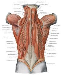 anatomy bones study guide anatomy bones study guide anatomy of