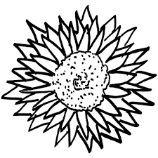 printable everlasting daisy flower coloring sheet for girls