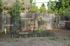 Planting Fruit Trees In Backyard Backyard Orchard Phase 2 A Growing Home Backyard Orchard Phase 2