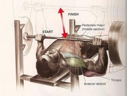 Hurt Shoulder Bench Press Front Delts Sore After Chest Day Stronger 24 7 Stronger
