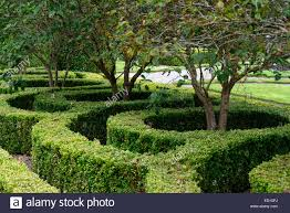 box hedge hedging parterre clipped cut design designed formal