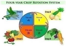 crop rotation for growing vegies jim u0027s mowing nz
