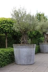 1686 best containers planters images on pinterest pots garden