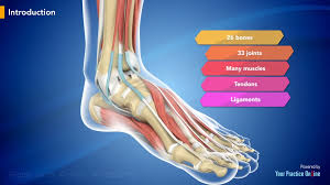 Ankle Anatomy Ligaments Foot And Ankle Anatomy Video Foot U0026 Ankle