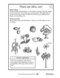 1st grade 2nd grade kindergarten science worksheets plants are
