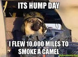 Hump Day Camel Meme - day camel meme