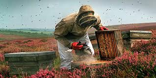 live bee removal los angeles usa live bee removal