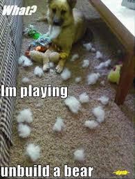 Funny Memes Animals - 25 hilarious animal memes