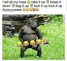 Funny Gorilla Meme - badgalronnie words lmao pinterest memes humour and hilarious