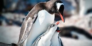 penguins basic facts about penguins defenders of wildlife