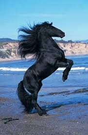 les 28 meilleures images du tableau caballos sur pinterest