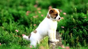 puppy wallpaper 6995558