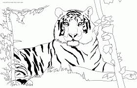 tiger printable coloring pages coloring home