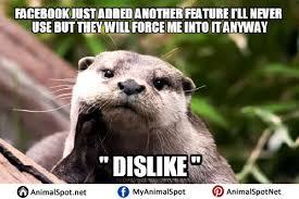 Sea Otter Meme - otter love meme love best of the funny meme