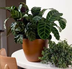 indoor plants nz 10 interesting vessels for your indoor plants fashion quarterly