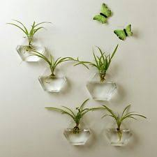 Wall Mounted Glass Flower Vases Wall Vase Ebay