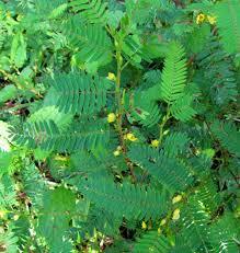 types of native plants plants north carolina native plant society