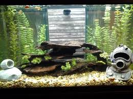 22 best fish tank design waterfall images on tank