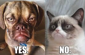 Grumpy Dog Meme - grumpy cat vs grumpy dog the battle