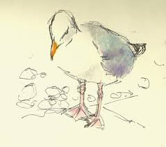 seagull a quick sketch with coloured pencil and rotring art pen