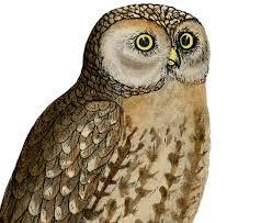 cute vintage owl printable the graphics fairy