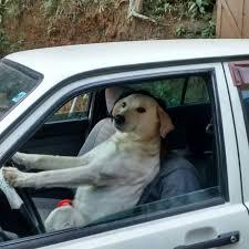 Dog Driving Meme - dog driving blank template imgflip