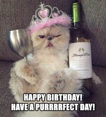 Happy Cat Meme - joke4fun memes happy birthday