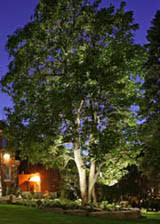 Outdoor Up Lighting For Trees Tree Lighting Advice And Tips